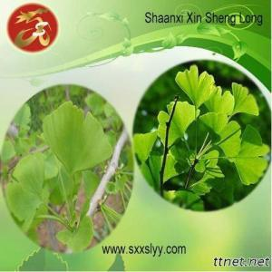 Gingko Leaf Extract