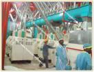5-500T Flour Machinery For Wheat And Maize